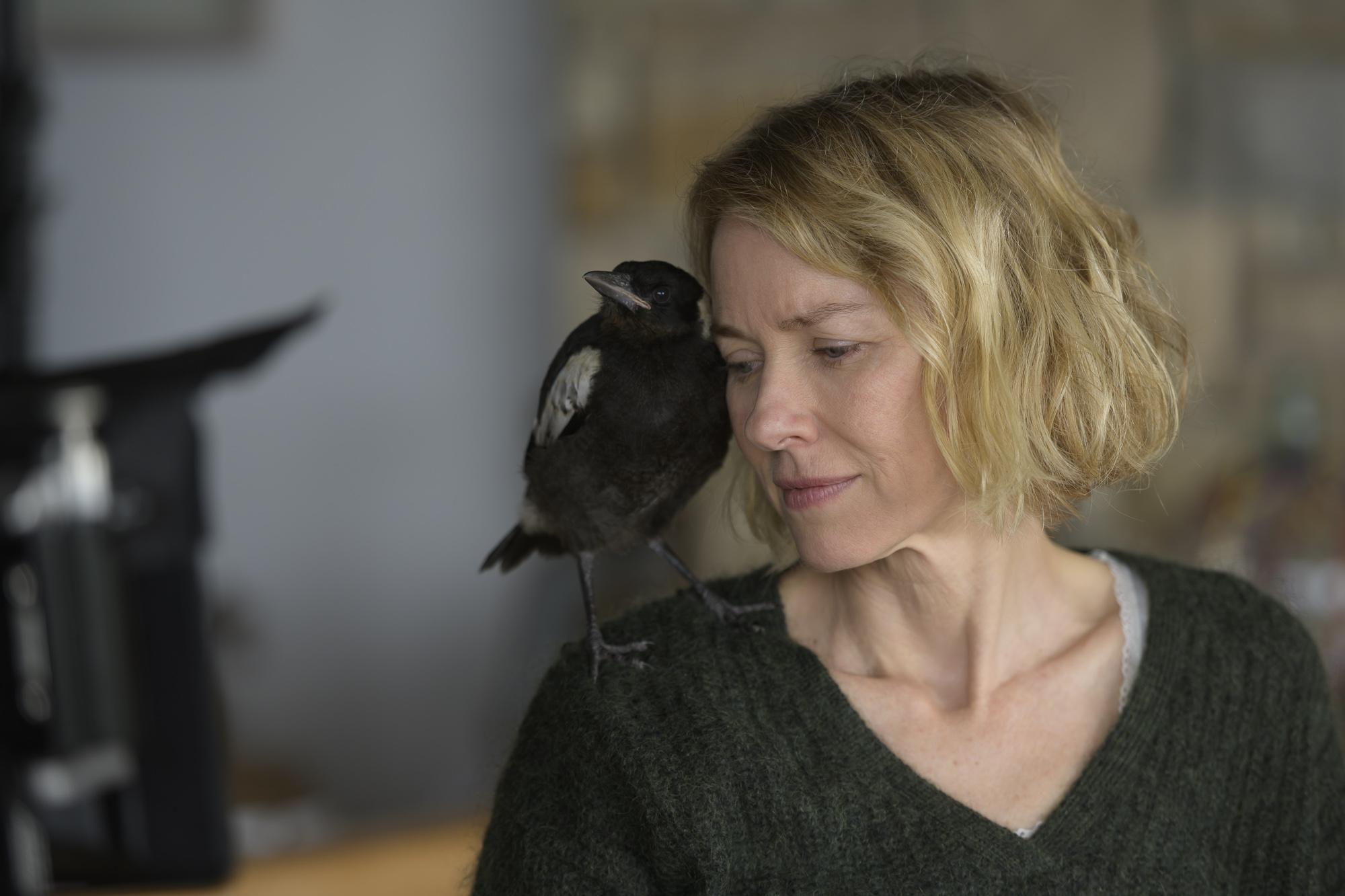 [Official Trailer] Penguin Bloom Lands in Australian Cinemas January 21